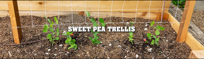 Making a Sweet Pea Trellis