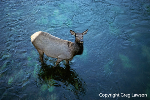 Wapiti Crossing - Greg Lawson Photography Art Galleries in Sedona