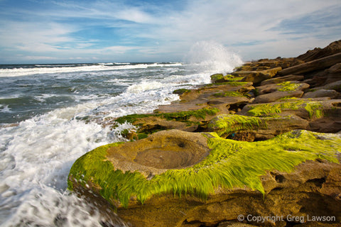 Coquina On The Coast - Greg Lawson Photography Art Galleries in Sedona