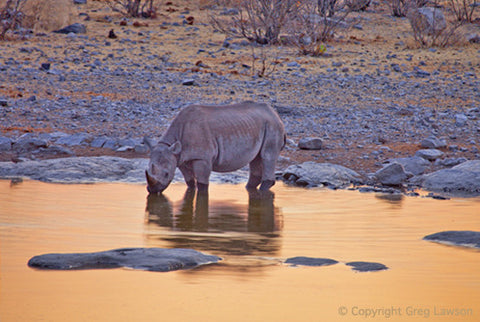 Rare Black Rhino - Greg Lawson Photography Art Galleries in Sedona