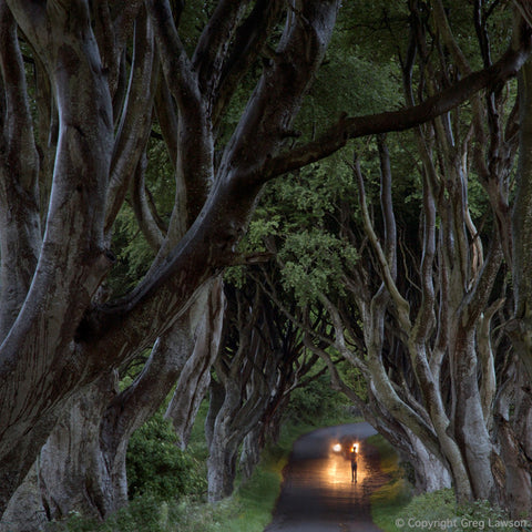 Dark Hedges - Greg Lawson Photography Art Galleries in Sedona
