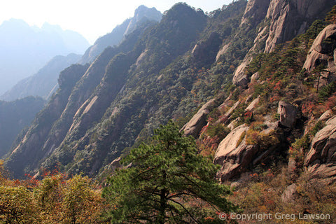 Huangshan Sentry - Greg Lawson Photography Art Galleries in Sedona