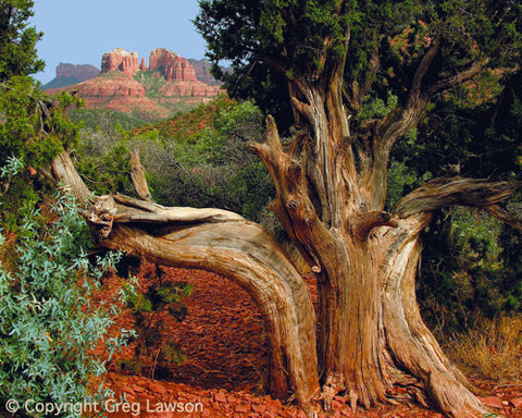 Arizona Cover - Greg Lawson Photography Art Galleries in Sedona