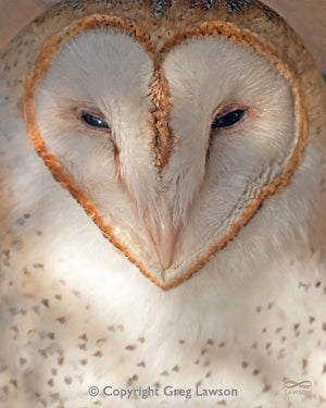 Owl Always Love You - Greg Lawson Photography Art Galleries in Sedona