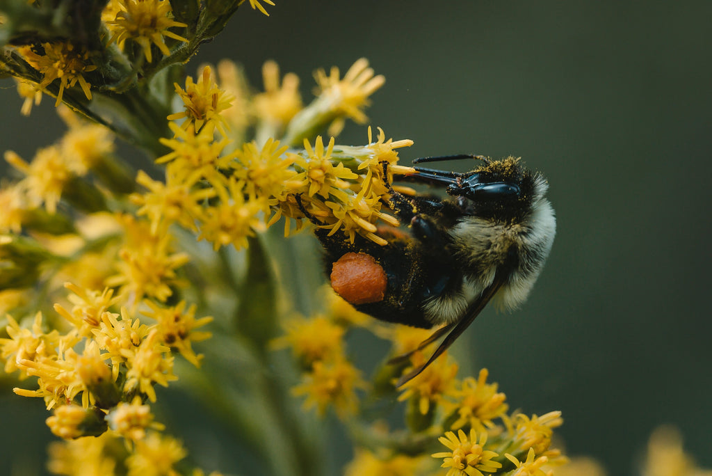 The Conservation Reserve Program (CPR) Can Be A Great Boost For Pollinators