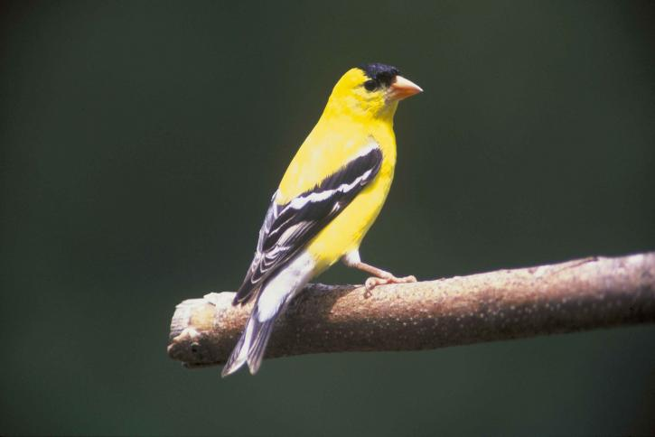 Native Plants That Attract Birds