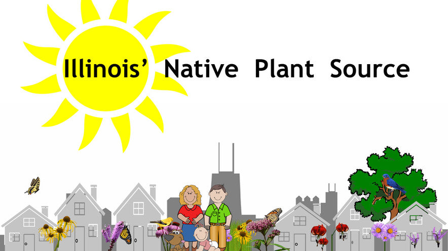 Illinois Native Plants & Native Seed