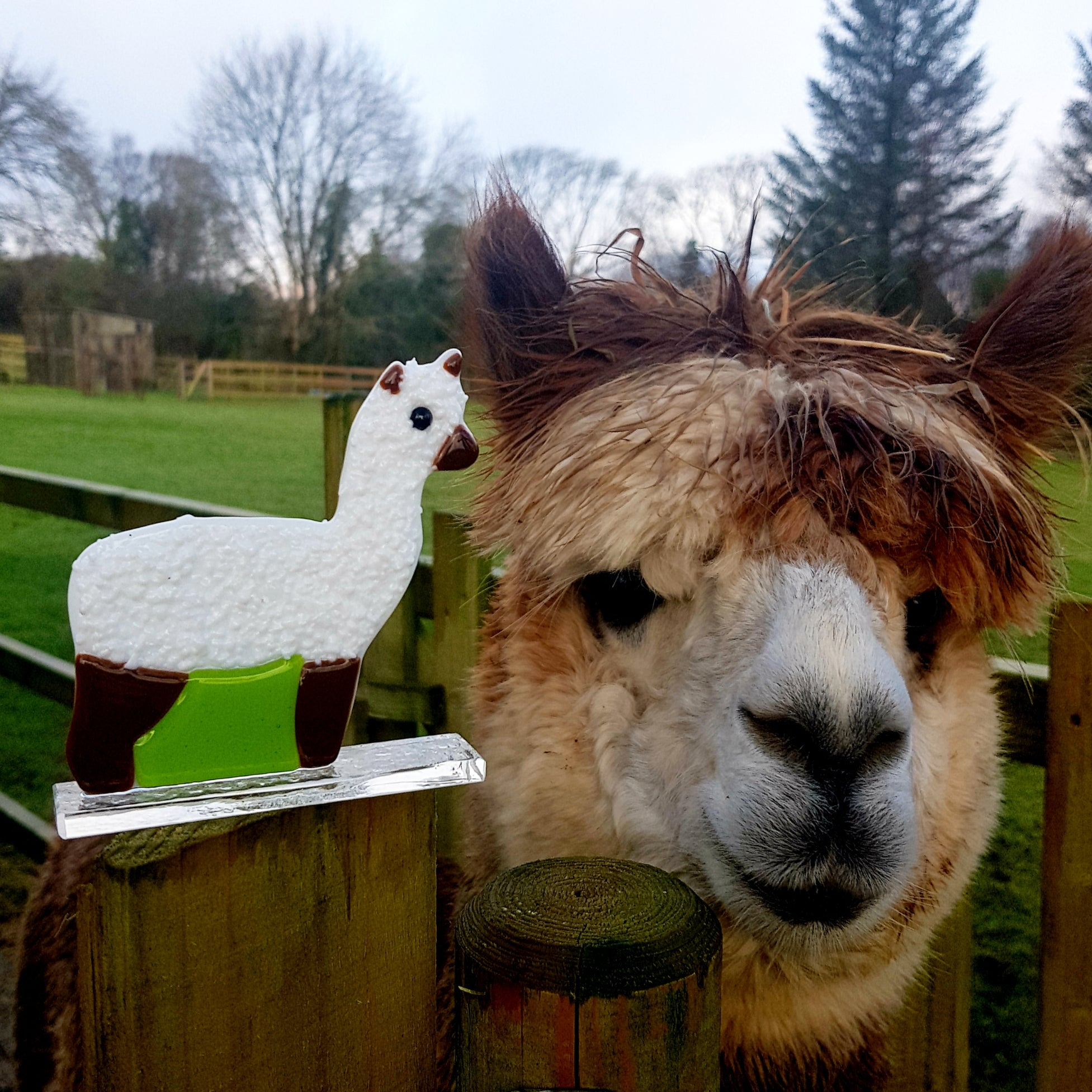 From glass artist to alpaca shepherd and back, in a day