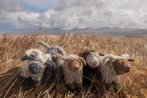 A charming handknitted wool sheep, available at Connemara Blue