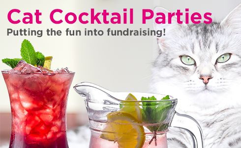 Cat Cocktail Parties with iCatCare