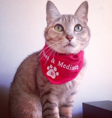 """Silver tabby with green eyes wearing a red bandanna with text that reads """"Paws and Meditate""""."""