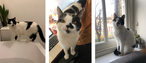 A triptych of images of Cassandra enjoying her foster home.
