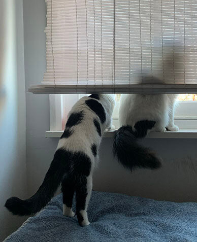 Cats looking out of a window. We see Rodney's silhouette against the blinds as Cass stands on her back legs to see what he sees.