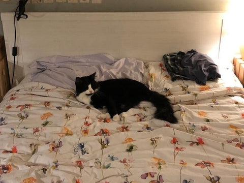 Del Boy, a fluffy black and white cat, gets comfortable on Anneli's floral bedspread.