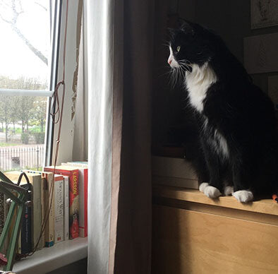Del Boy the fluffy black cat sit on a chest of drawers and looks out of the window.