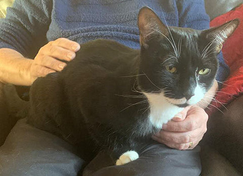 Dorian is a lap-cat and benefits from receiving lots of affection.