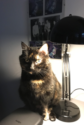 Kit the cat! A tortoiseshell cat sits next to a lamp.