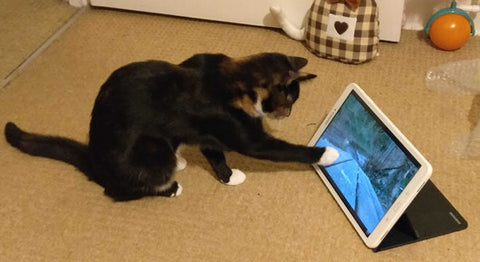 Tortie kitten Estella uses her paw to prod the screen of an iPad showing bird videos.