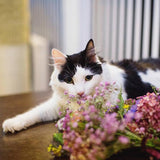 Peter - can sniffing flowers