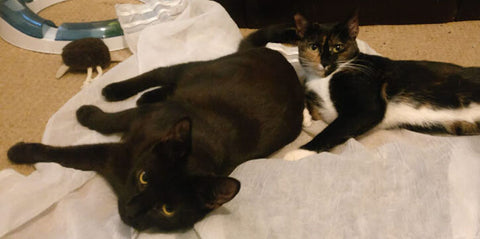 Olive and Estella are rarely apart from each other! Here they are lying close to each other on the carpet.