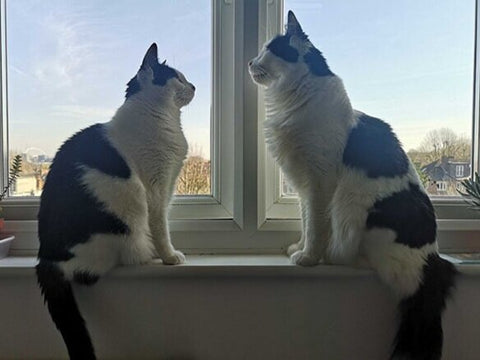 Peter and Wendy, brother and sister, gaze at each other while sitting on a windowsill.