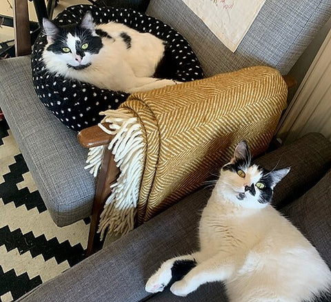 Rodney and Cassandra, two black and white cats, laze around on Abbie's furniture.