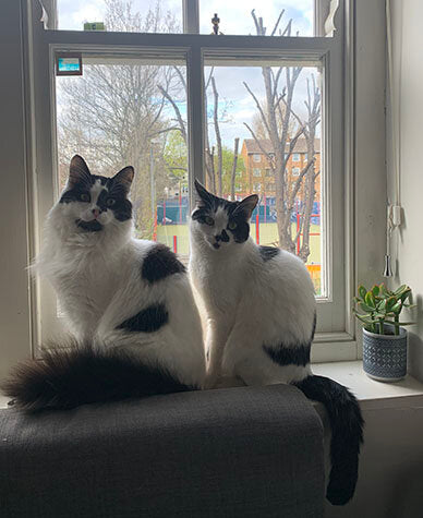 Cats sitting in a window. Rodney's tail is voluminously fluffy and Cassandra's is draped elegantly over the windowsill.