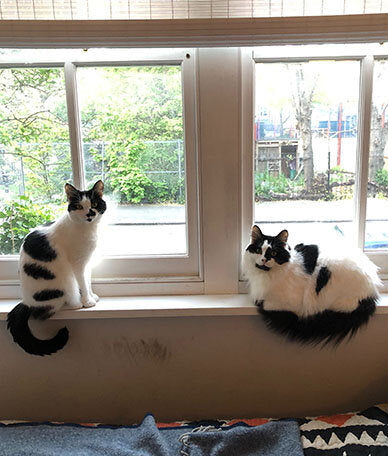 Cats sharing a windowsill. Rod and Cass look at the camera.
