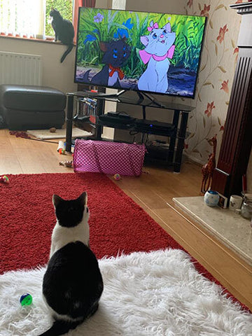 Salome is fixated by the animated Disney movie The Aristocats.
