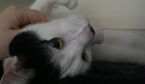 Tink enjoys having her chin scratched!