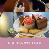 High Tea with Cats - Lady Dinah's Cat Cafe