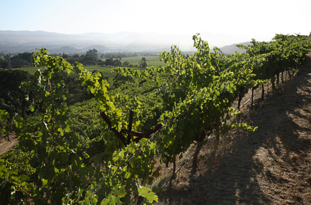 Schlein Vineyard