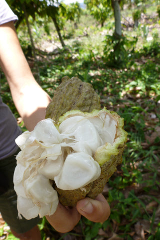 open cacao pod with beans and pulp