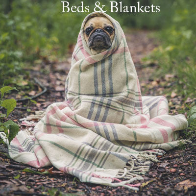 Beds & Blankets