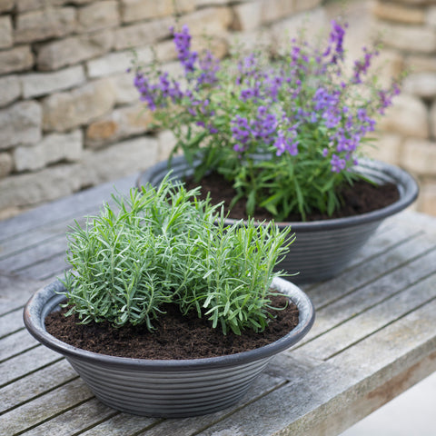 Set of 2 Taplow Planter Bowls