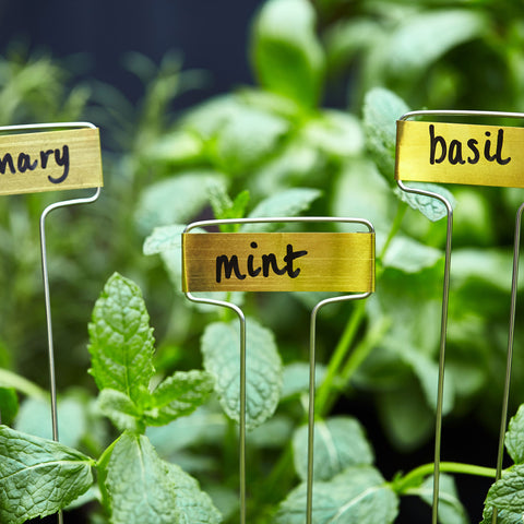 Garden Herb Sign and Marker - Set of 10