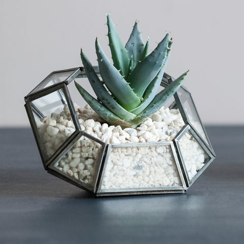 Small Zinc and Glass Planter