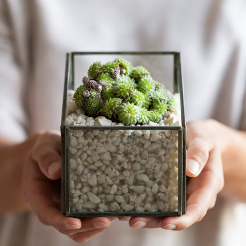 Square Zinc and Glass Planter