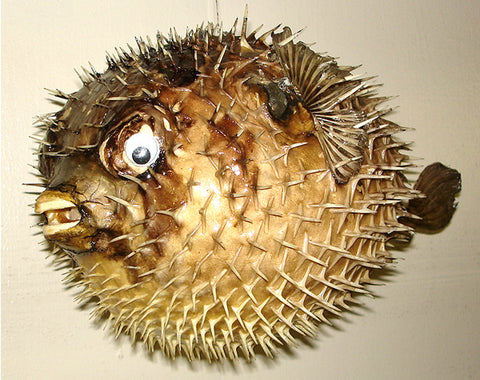 Tiki Bar Decor Puffer Fish