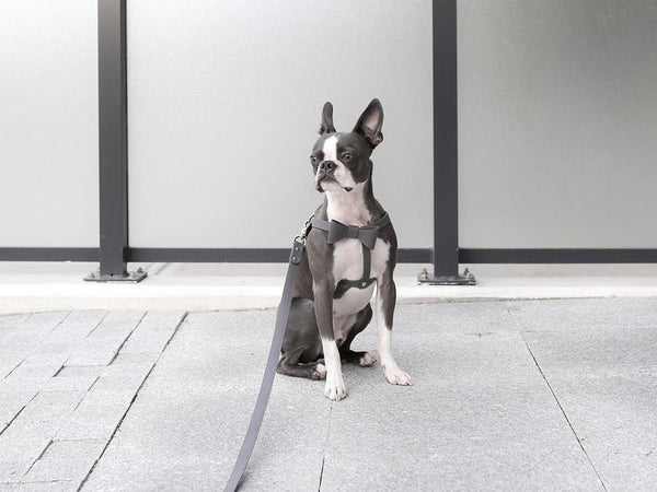 Stone gray leather harness with removable bow
