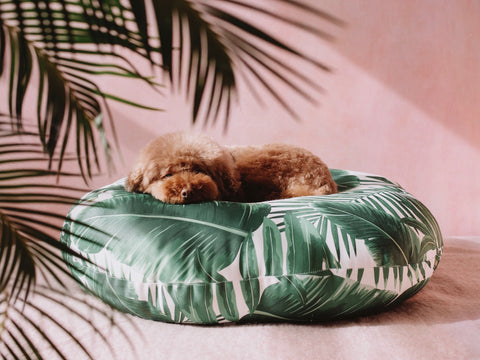 Tropical Lounge Bed