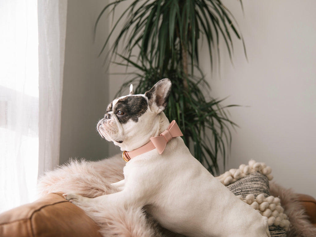 Blush pink leather collar with removable bow