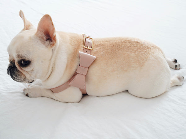 Blush Pink leather Harness with removable bow