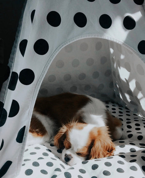 Polka Dots Dog Teepee