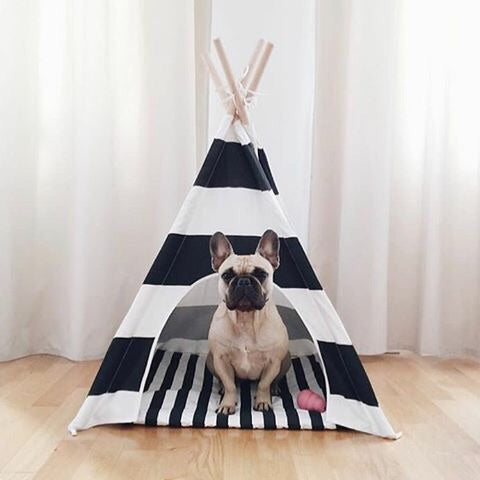 Striped Dog Teepee