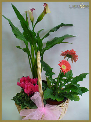 Planted Arrangement, Bunches & Bows Florist, Shop 9, Albion Place, Dunedin 9016.jpg