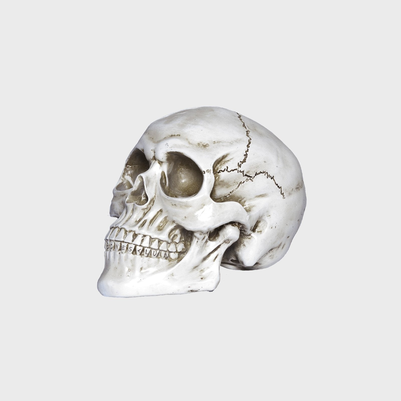 William B Bones - White Skull