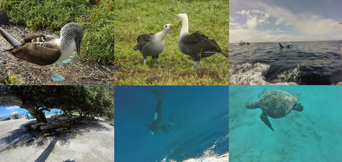 Galapagos montage, c/o Laura Hannant and Jack Thompson