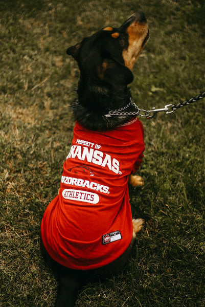 Arkansas Athletics Dog Tee