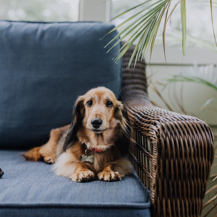 6 Tips on How to Keep Your Furry Friends Safe Around the Home